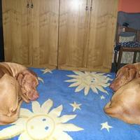 27. Luca és Bence