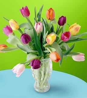 tulipan1.jpg