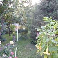 Felnémeti lakosok a Virágos Egerért Szép Környezetért Versenyen