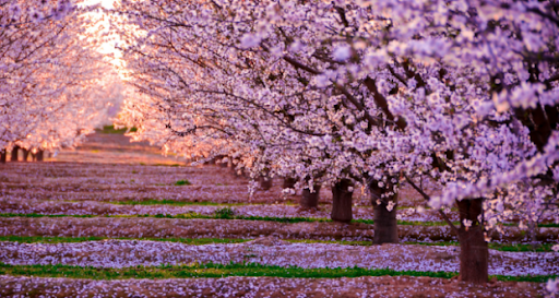 cseresznye.png