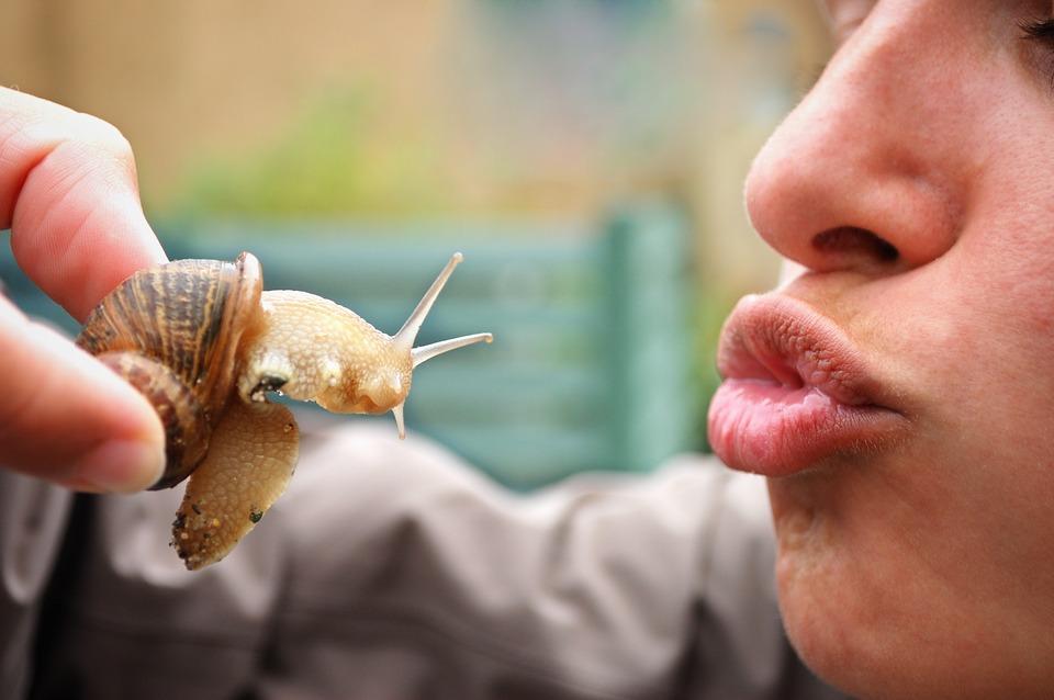 snail-2036178_960_720.jpg
