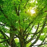 Fák és madarak napja
