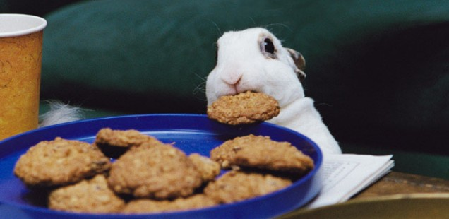 cookiethief-636x310.jpg