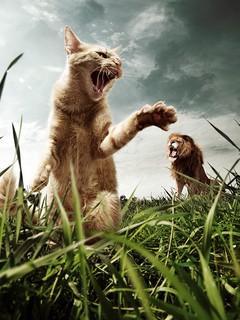 lionvscat_u7f4bhz8.jpg