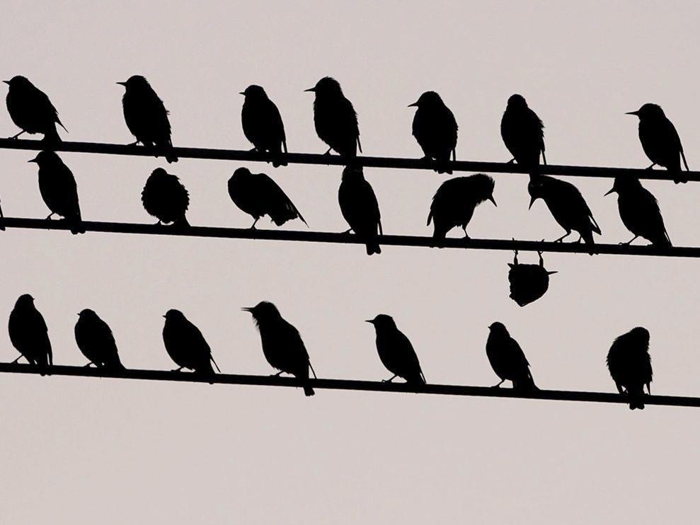 punk madár.jpg