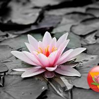A tantra és az új tudatosság