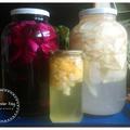 Így készíts probiotikus savanyú káposzta levet!
