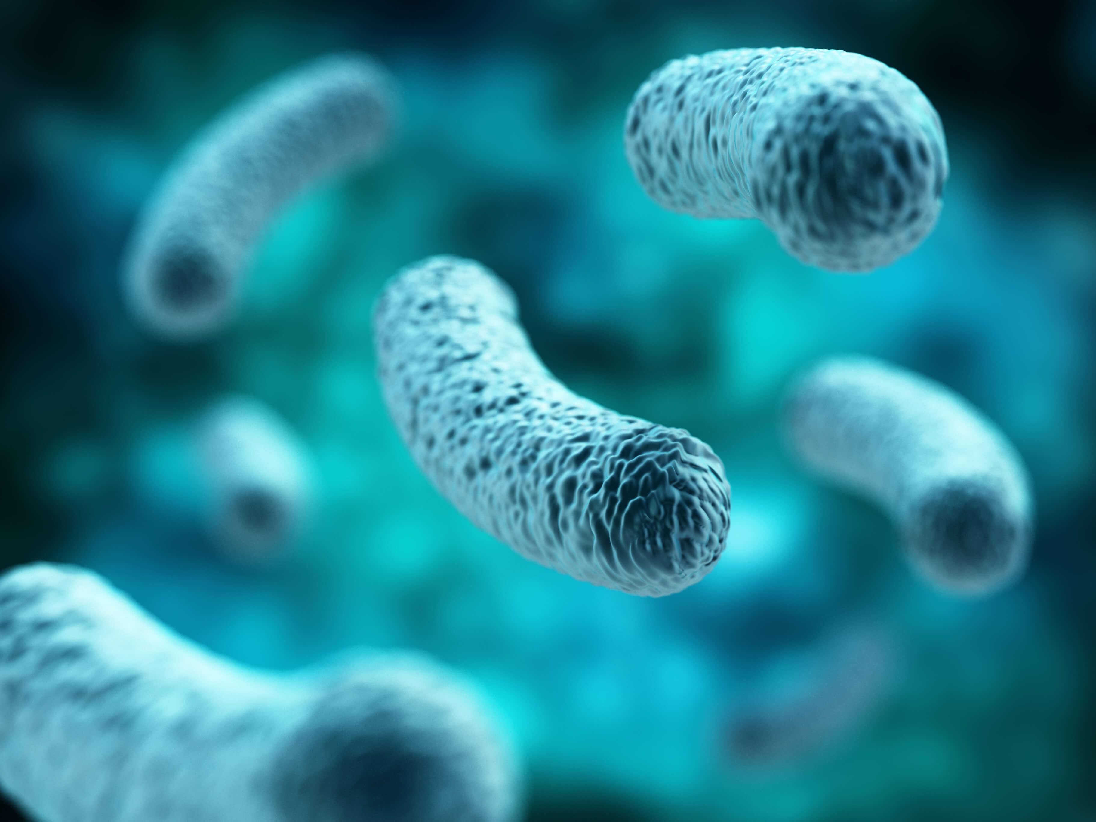 what-is-lactobacillus-acidophilus.jpg