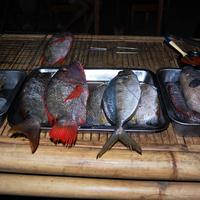 Travel:Indonesian dinner