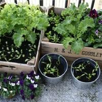 7 zöldség, amit már a hétvégén elvethetsz az erkélyen magadnak