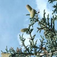 Mediterrán hangulat a Balaton északi lankáján
