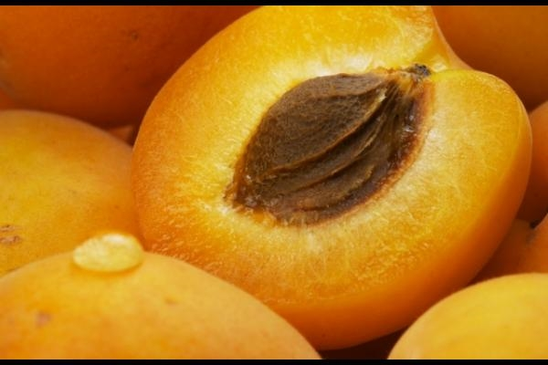 Apricot-Kernel-Pictures.jpg