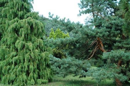 Folly_Arboretum11_2.jpg