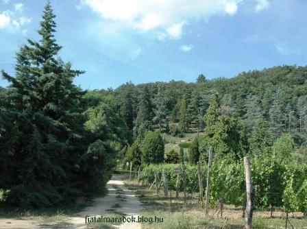 Folly_Arboretum13_2.jpg