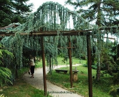 Folly_Arboretum9_2.jpg