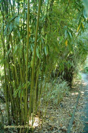 Parc_Tete_dOr_bambuszerdo.JPG