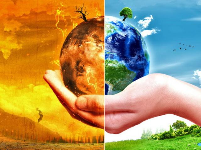 Kinyírja a klímaváltozás a magyar bükkösöket és a fenyőket is