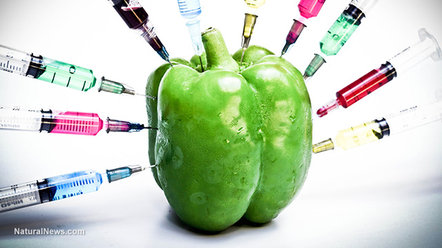 gmo-bell-pepper-injections.jpg