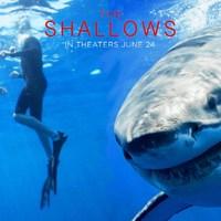 A zátony - Avagy a cápa visszatér