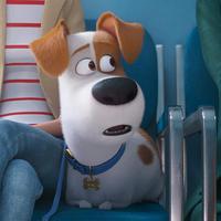 A cuki állatok visszatérnek: The Secret Life of Pets 2-teaser trailer + poszter
