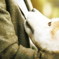Hacsi - A leghűségesebb barát (Hachiko: A Dog's Story)