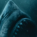Ismét egy cápás horrorfilm: 47 Meters Down: Uncaged-trailer + poszter