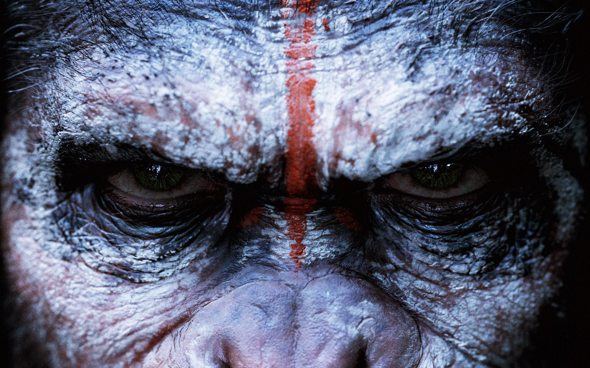 dawn-of-the-planet-of-the-apes-face-wallpaper-.jpg