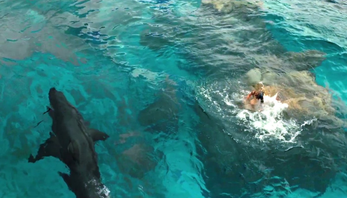 the-shallows-2016-movie-review-shark-thriller-blake-lively.jpg