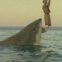 Az utolsó cápa