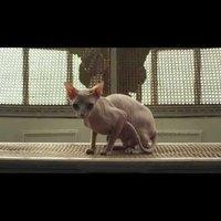 Így néz ki egy díjnyertes magyar videoklip