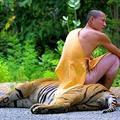 Az ajtó előtt álló Tigris – esetbemutatás