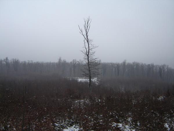 magányos fa.jpg