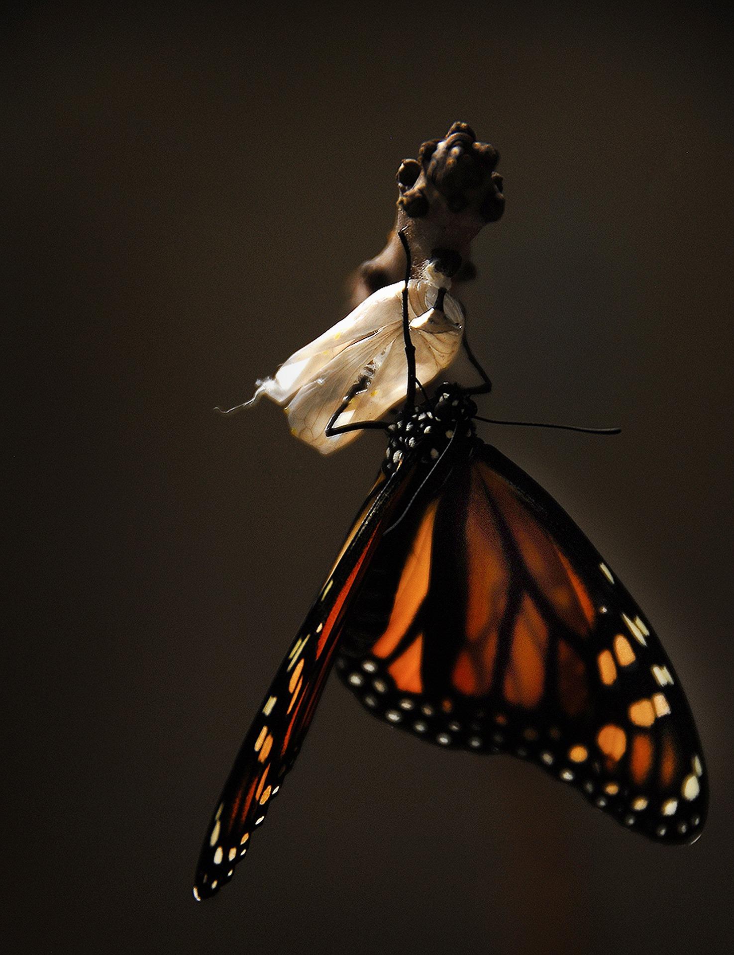 butterfly_change.jpg