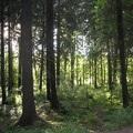 Helsinki: város az erdőben
