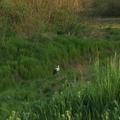 Szevasz tavasz-helló nyár