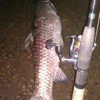 Az új megamódszer békés halak horgászatára: a pergetés
