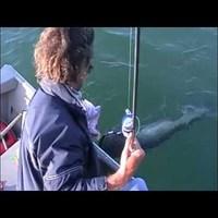 Vertikális horgászat az Ebron