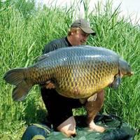 Új tőponty világrekord - New common carp record