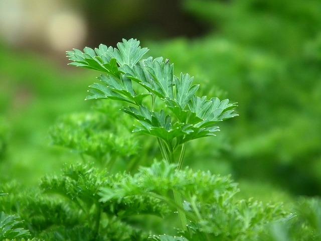 parsley-246557_640.jpg