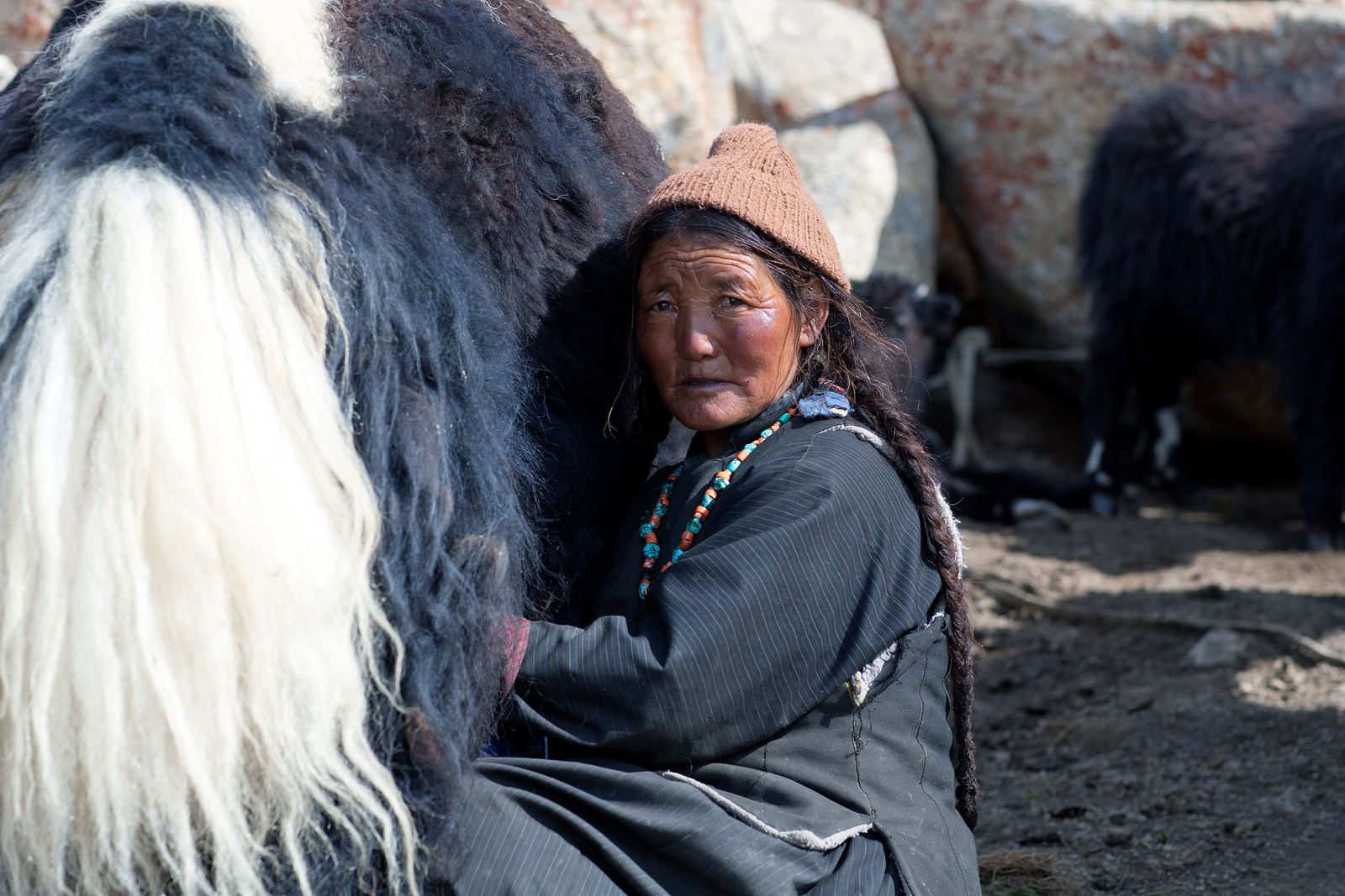 bigstock-tibetan-woman-with-yak-in-lada-148124192.jpg