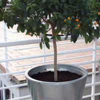 Növényeink téli álma