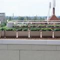 Modern enteriőrök növénydekorációja