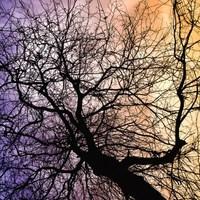 Dióhéjban...- A fák nem nőnek az égig