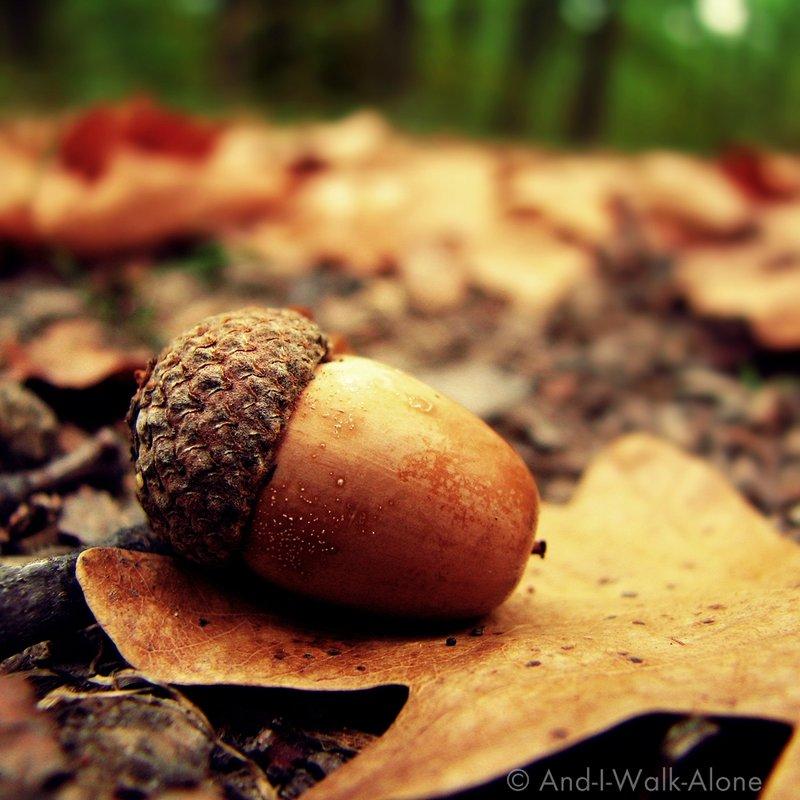 Autumn_Again___by_And_I_Walk_Alone.jpg