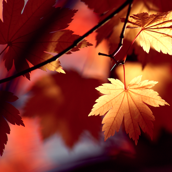 Autumn_Shadows_by_Jay_Cougar_Prints.png