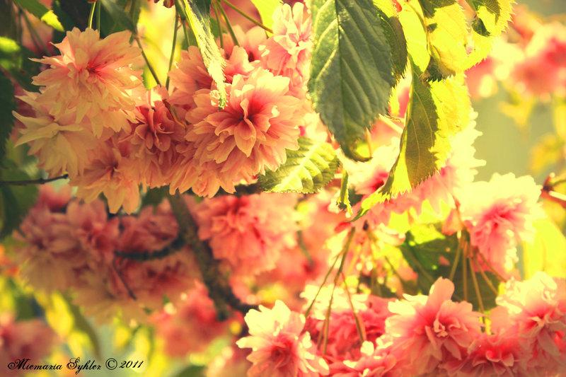 a_summer_romance_by_mivthevampire-d3ffs3t.jpg