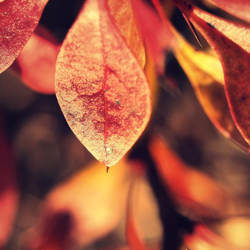 autumn_echo_by_faux_toe.jpg