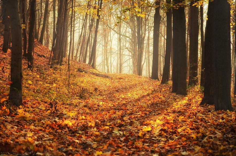 autumn_melody_by_r3novatio-d4gqkhr.jpg