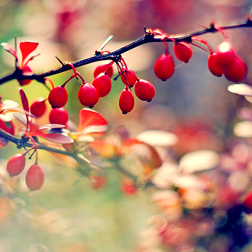 fruits_of_autumn__by_magnesina-d2zgio6.jpg