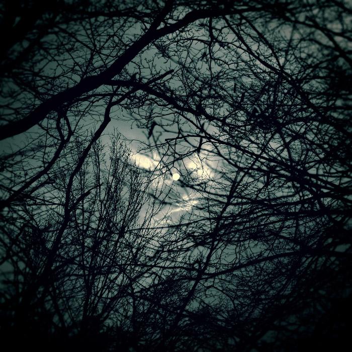 night_in_forest_by_wojtar.jpg